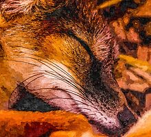 Artwork Mr Fox by ncp-photography