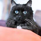 Cat 14 by Rebecca Cozart