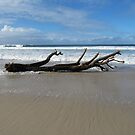Driftwood! After the storm. Sharpes Beach Ballina. N.S.W. Nth. Coast. by Rita Blom
