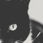 Portrait of a Cat in Black and White by Kadwell