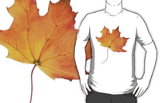 Maple Leaf  by Mariana Musa