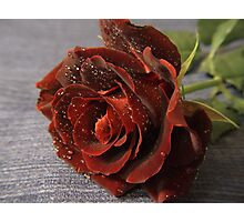 Red Rose on Blue Fabric Background Photographic Print