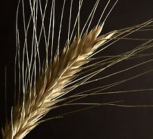 Ear of Wheat by Martie Venter