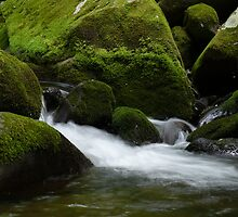 Mountain Stream by Sherri Hamilton