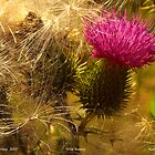 Wild Beauty by Adela Hriscu