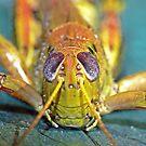 Grasshopper 1 ! by robkal