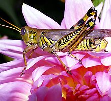Grasshopper (full length) ! by robkal