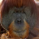 Old man Orang Utan by Aussiebluey