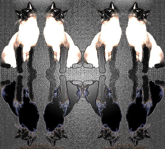 Siamese Reflections by nikspix