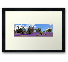 Field Of Dreams Panoramic Framed Print