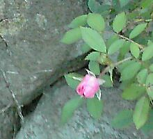 rose on rock by missgraice