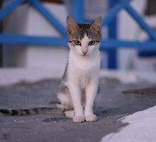Santorini Cat by sotiri
