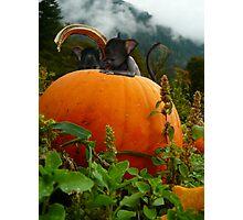 Pumpkin sprite infestation Photographic Print