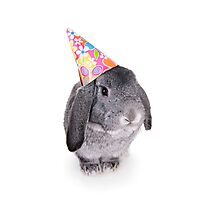 Birthday Rabbit Photographic Print