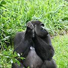 Man Versus Gorilla by johnpaul  broomfield