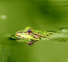 Frog by Wisent