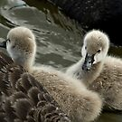 Sibling Signets by Gayle Shaw