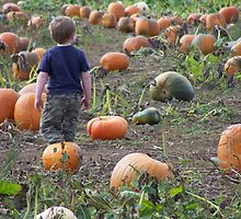 getting lost in a world of pumpkins by michael griffith