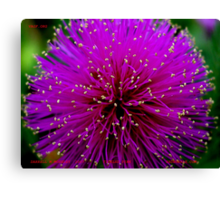 TICKLED PINK! Canvas Print