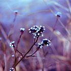 Tiny Flowers in a Purple Haze by Renae