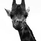 Mr.Giraffe by dvdan