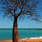 Lone Boab by chriso