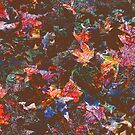Autumn Leaves by PhotogeniquE IPA