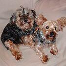 Teddy & Jodie by AnnDixon