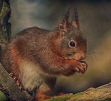 cute little squirrel by Nicole W.