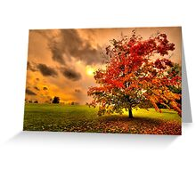 Red Maple tree  Greeting Card