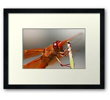 A Flame Dragon's Smile Framed Print