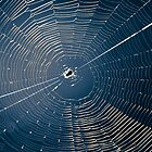 The Spiders Web by Corey  Brown