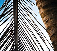 Palm Tree close up  by Joanna Popiolkiewicz