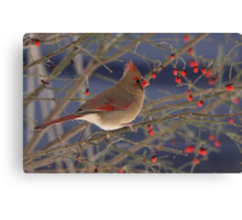 Red Bird Red Fruit Canvas Print