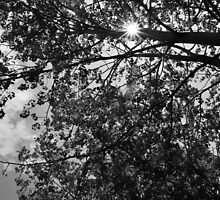 Lazy Summer Daze by PhotoGraphicsSL