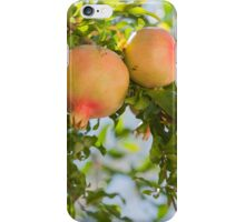 pomegranate on tree iPhone Case/Skin