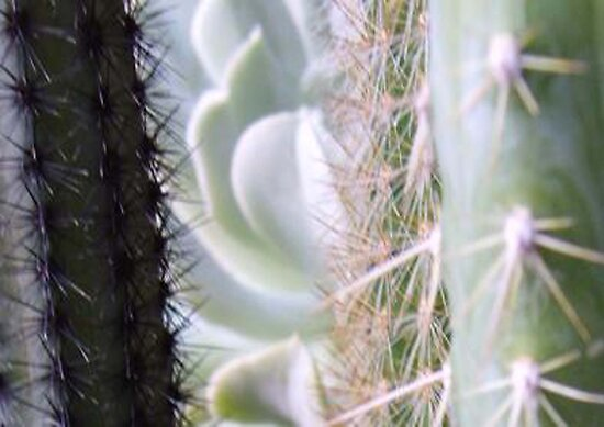 Prickly View by Gozza