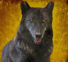 Black wolf by Sandy Keeton