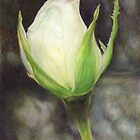 White Rose Bud by Belinda Lindhardt