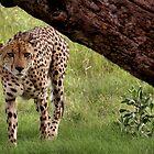 Impala, I See You! by bonniemonahan1