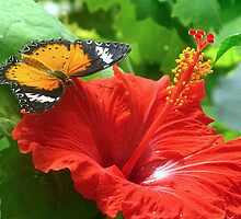 Butterfly & Hibiscus by Sharon Perrett