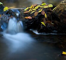 Autumn Stream by AustralianImagery