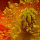 poppy by panthrcat