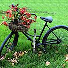 Bicycle Basket by nikspix
