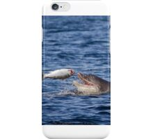 Dolphin with Salmon iPhone Case/Skin
