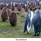 King Penguins on the Falkland Islands by Jacinthe Brault