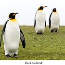 Three king penguins by Jacinthe Brault