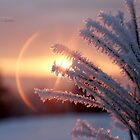 """"""" Frosted Sunbow """" by Richard Couchman"""
