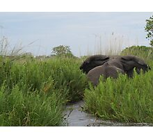 Cranky Elephant Photographic Print