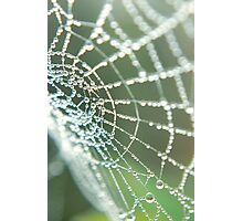Web of Pearls Photographic Print